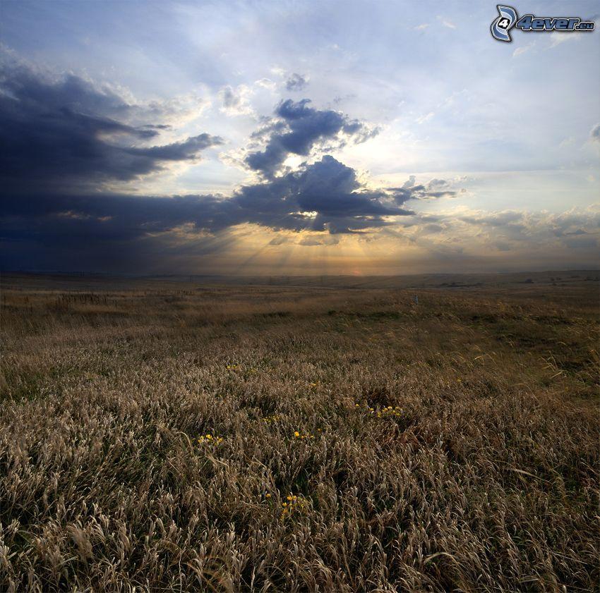 campo, rayos del sol detrás de las nubes