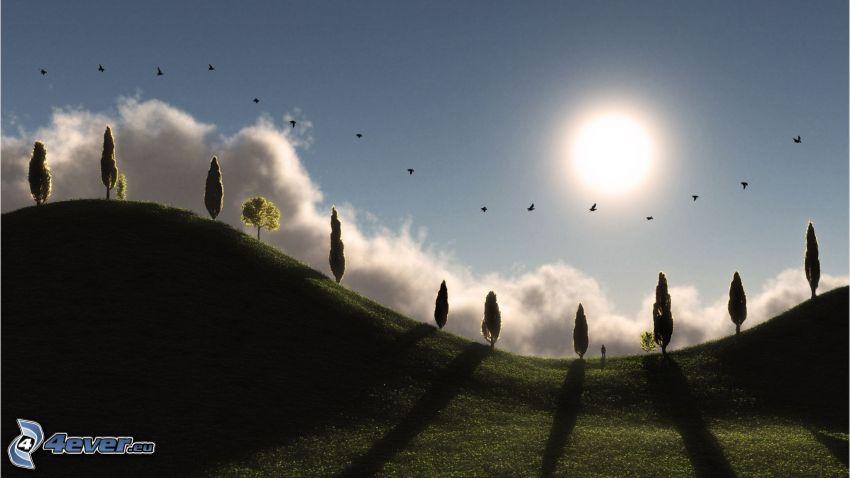 campo, sol