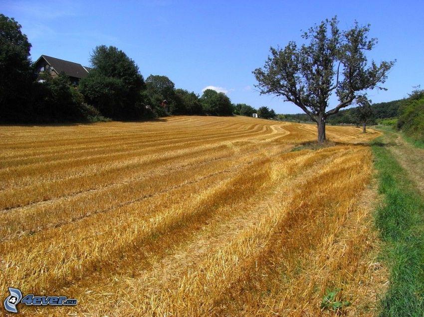 campo segado, árbol en el campo