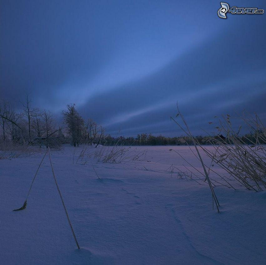campos nevados, hierba seca