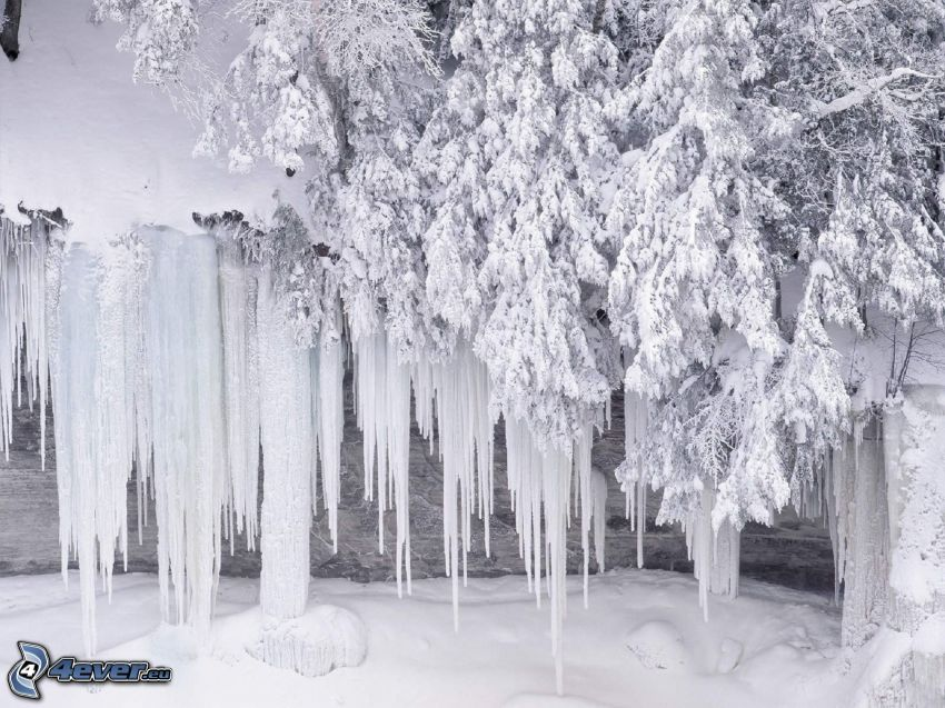 carámbanos, árbol nevado