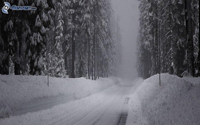 carretera de invierno, camino por el bosque, bosque nevado