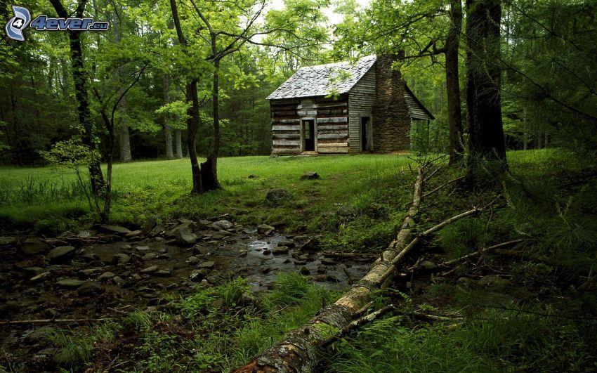 casa, bosque, corriente que pasa por un bosque, árboles, hierba