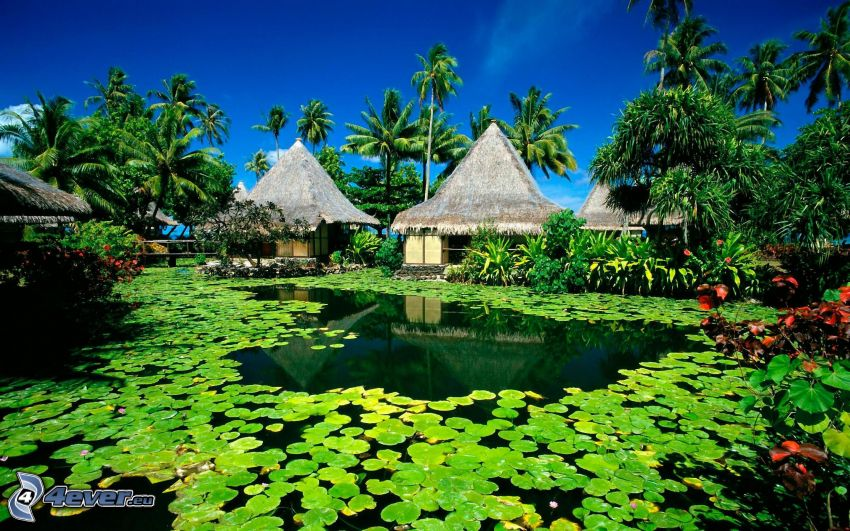 Casas en el agua, palmera, lirios de agua, lago