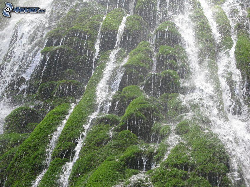 cascada, musgo