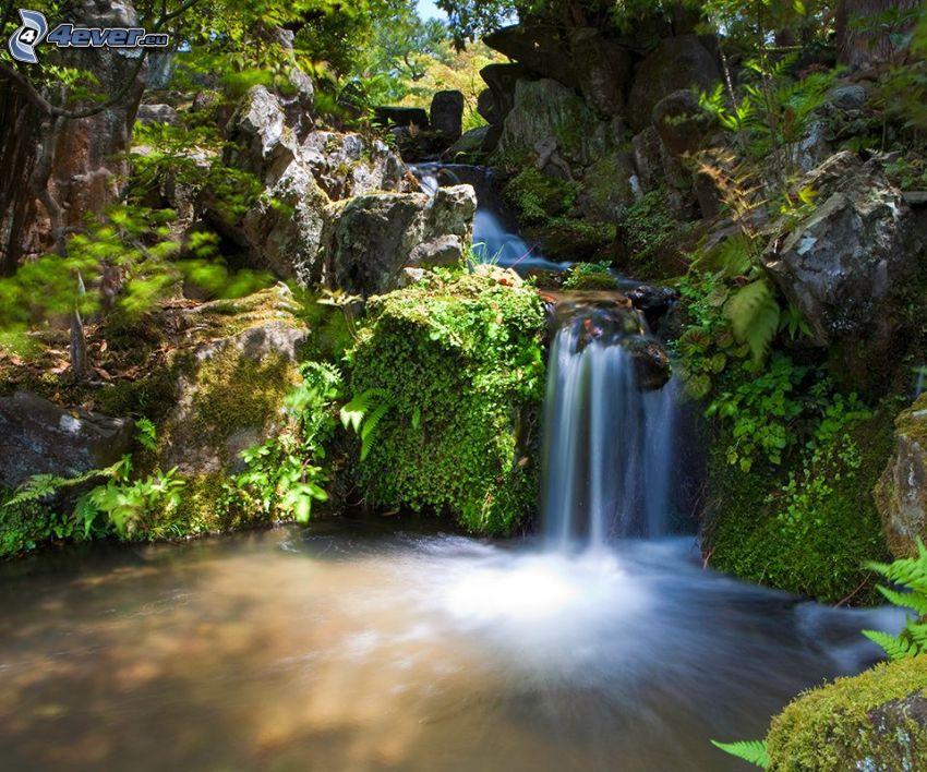 Cascada en el bosque, lago en un bosque, corriente que pasa por un bosque, verde