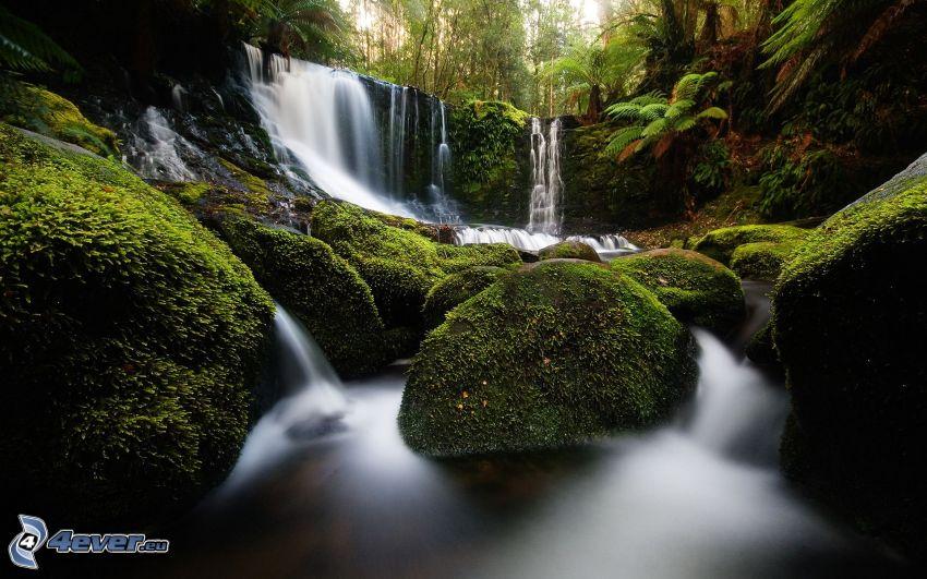 cascada en la selva, rocas, musgo, verde