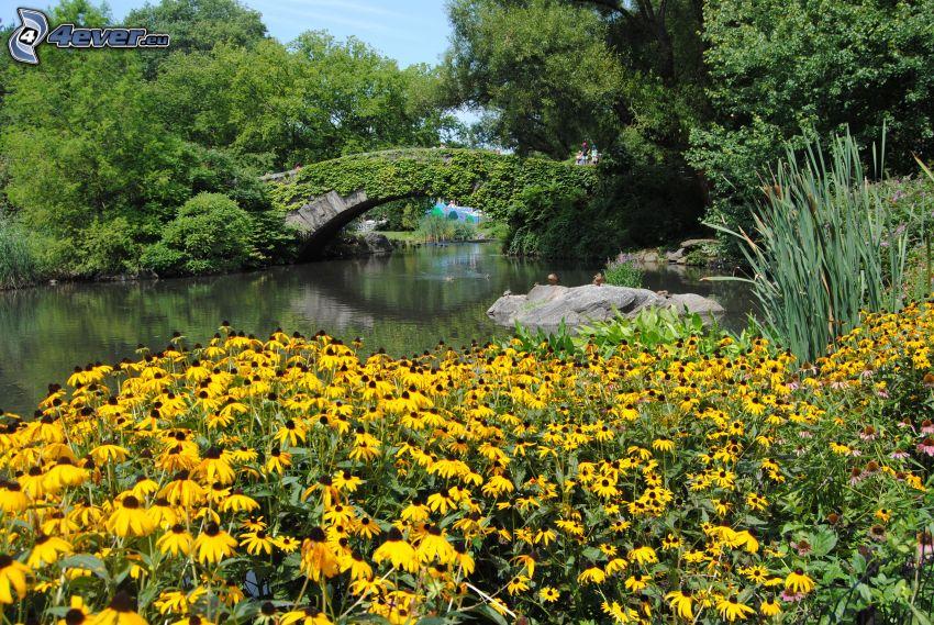 Central Park, flores amarillas, lago, puente de piedra, árboles