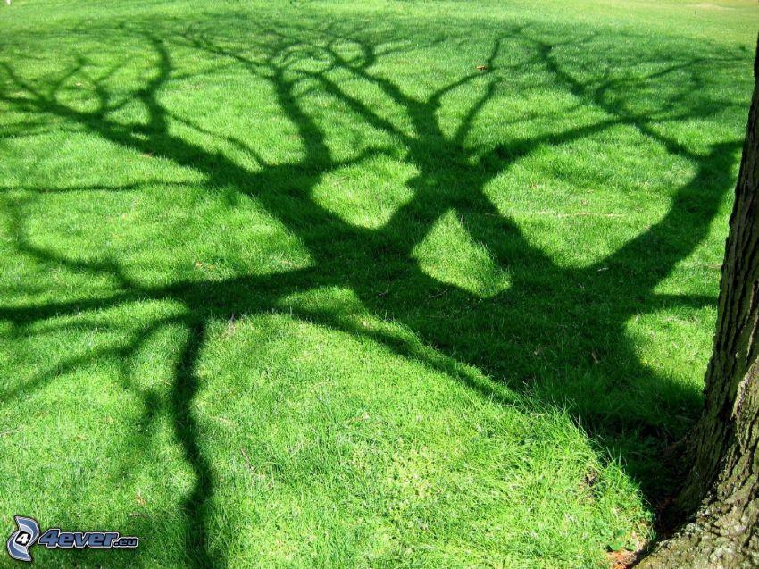 césped, árbol de sombra