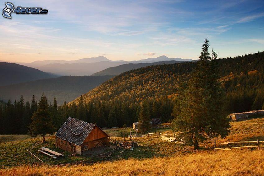 choza, casa de madera, bosques de coníferas, colina