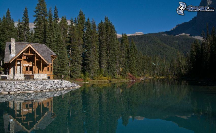 choza, lago, bosques de coníferas, colina