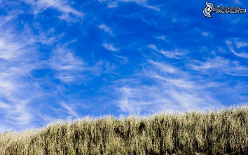 cielo azul, nubes, hierba seca