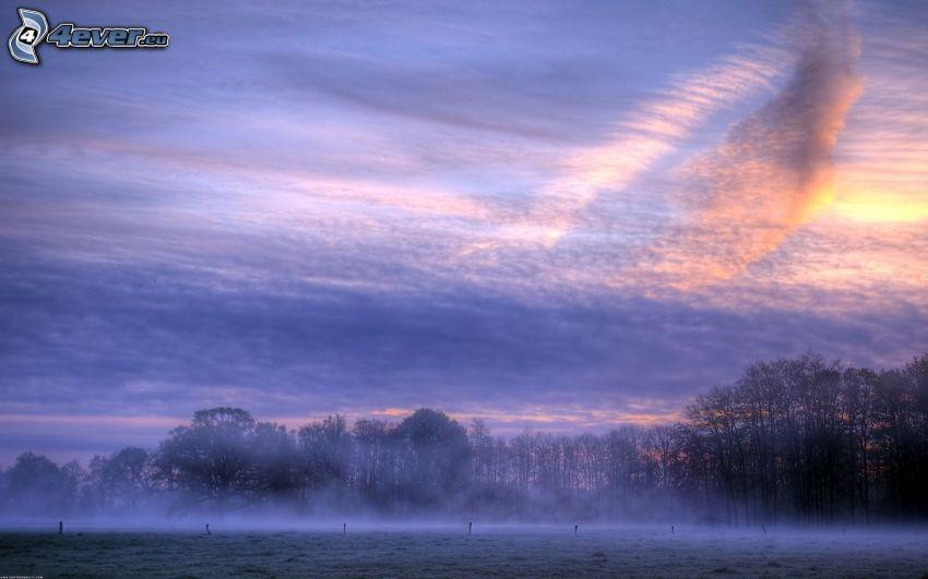 cielo púrpura, bosque, niebla baja