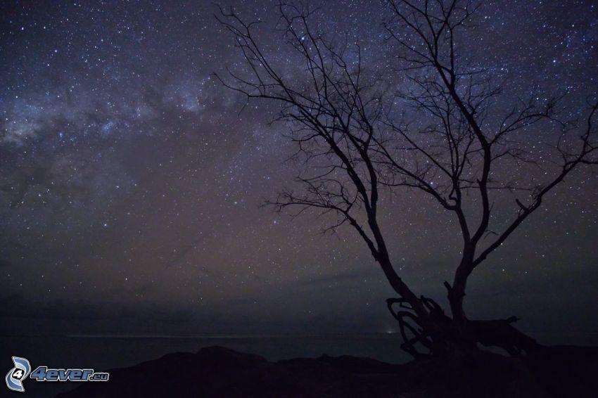 árbol solitario, cielo estrellado, noche