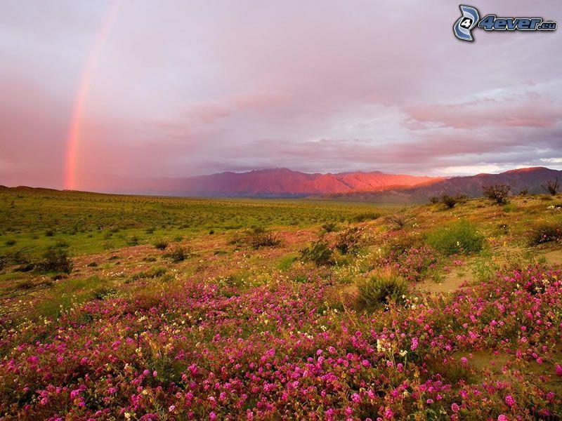 arco iris, flores de color rosa