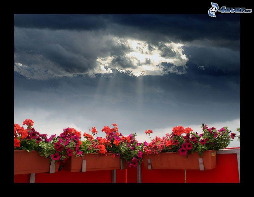balcón, flores, cielo, luz intensa, rayos de sol