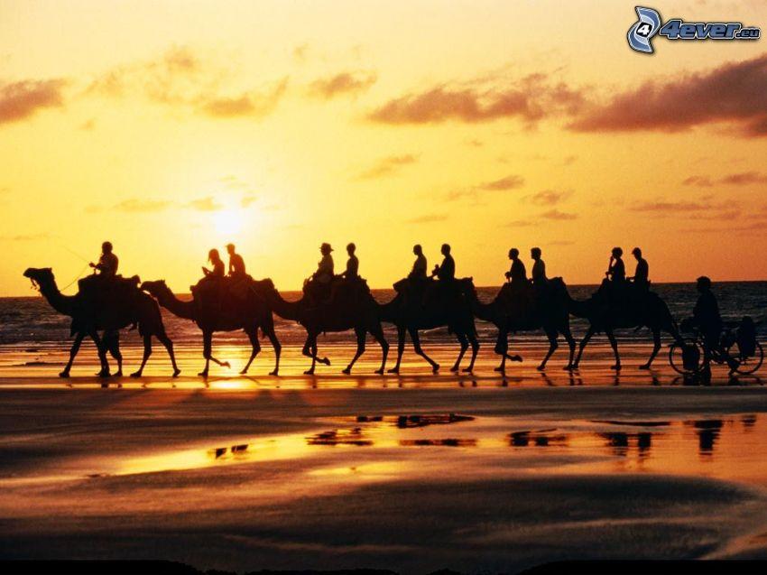 beduinos en camello, costa al atardecer