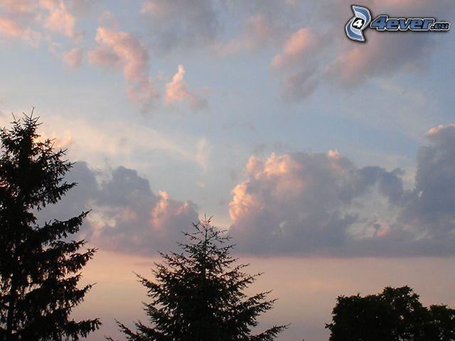 cielo, siluetas de los árboles