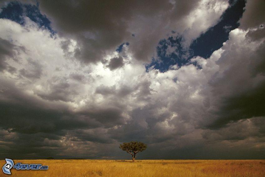 nubes, árbol en el campo, campo amarillo