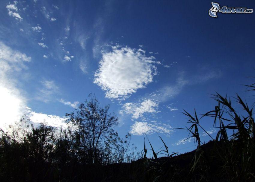 nubes, paja de hierba