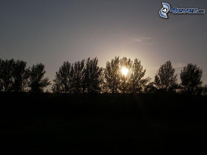 puesta de sol detrás de un árbol, siluetas de los árboles