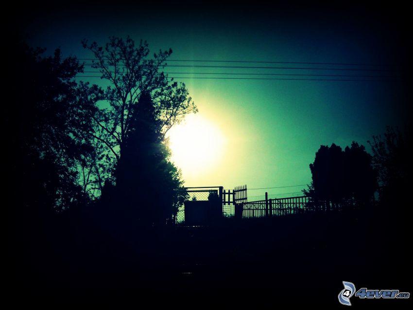 puesta del sol, siluetas de los árboles, valla