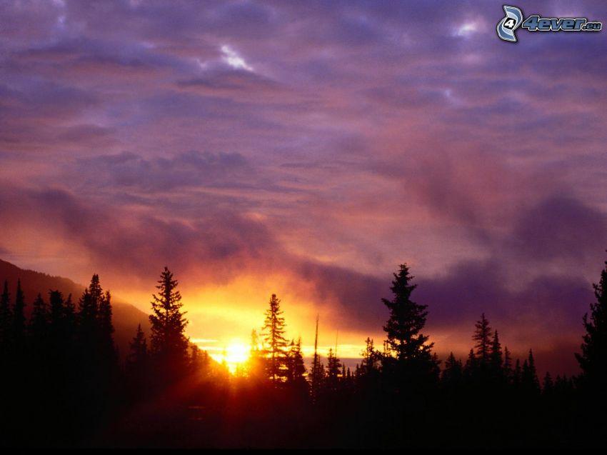 San Isabel National Forest, puesta del sol, cielo púrpura, silueta de un bosque