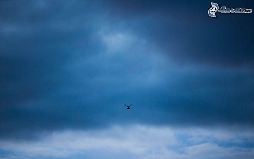 silueta del ave, nubes oscuras