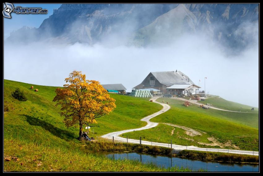 colina, árbol amarillo, casa, piscina, rocas