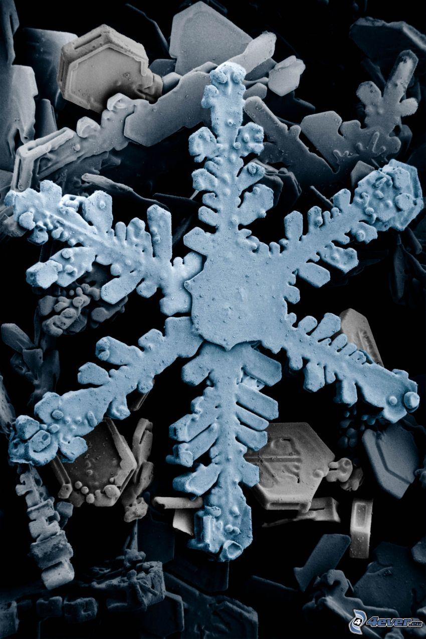 copo de nieve, microscopio, cristal