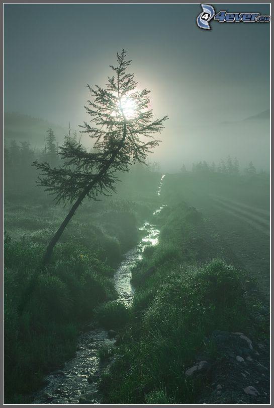 corriente, árbol solitario, hierba, sol débil