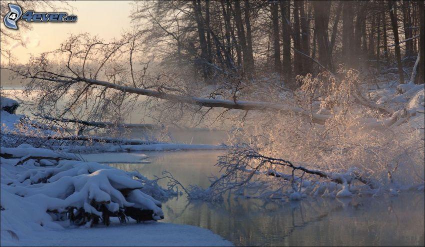 corriente que pasa por un bosque, árbol, nieve