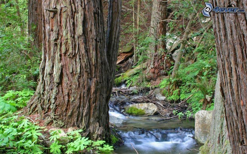 corriente que pasa por un bosque, árboles, verde