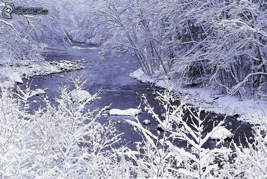 corriente que pasa por un bosque, árboles nevados