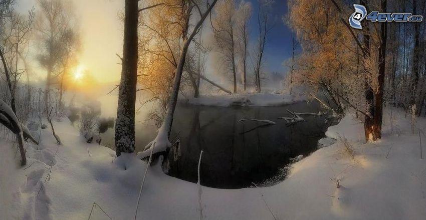 corriente que pasa por un bosque, bosque nevado
