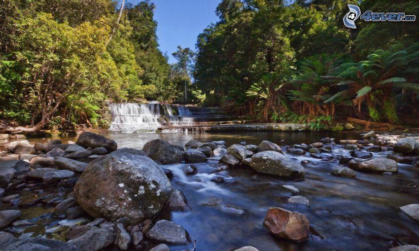 corriente que pasa por un bosque, cascadas, piedras, árboles