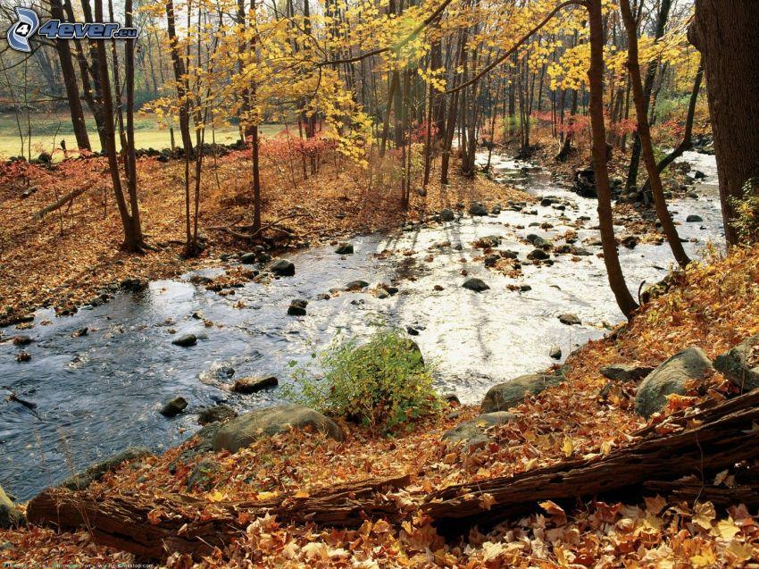 corriente que pasa por un bosque, hojas caídas