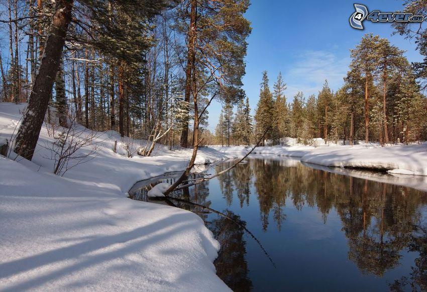 corriente que pasa por un bosque, nieve, bosque de coníferas nevado