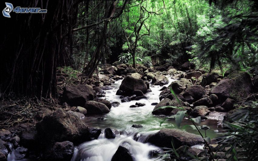 corriente que pasa por un bosque, piedras, verde