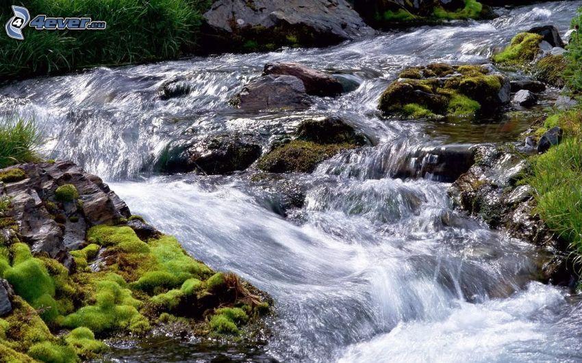corriente que pasa por un bosque, piedras