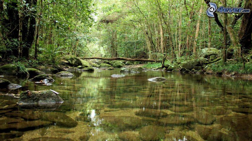 corriente que pasa por un bosque, río, bosque