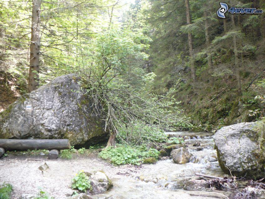 corriente que pasa por un bosque, rocas, árboles