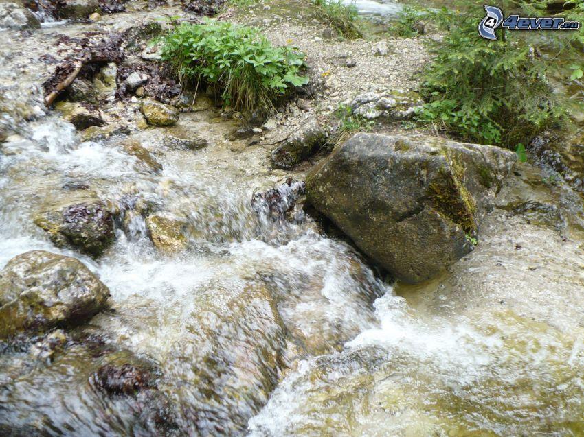 corriente que pasa por un bosque, rocas