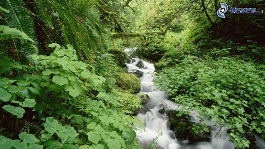 corriente que pasa por un bosque, verde