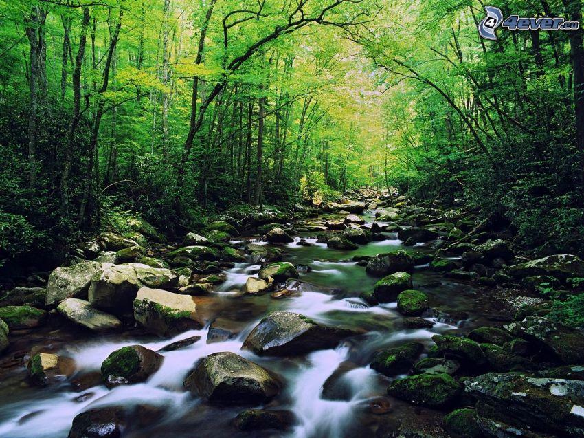 corriente que pasa por un bosque