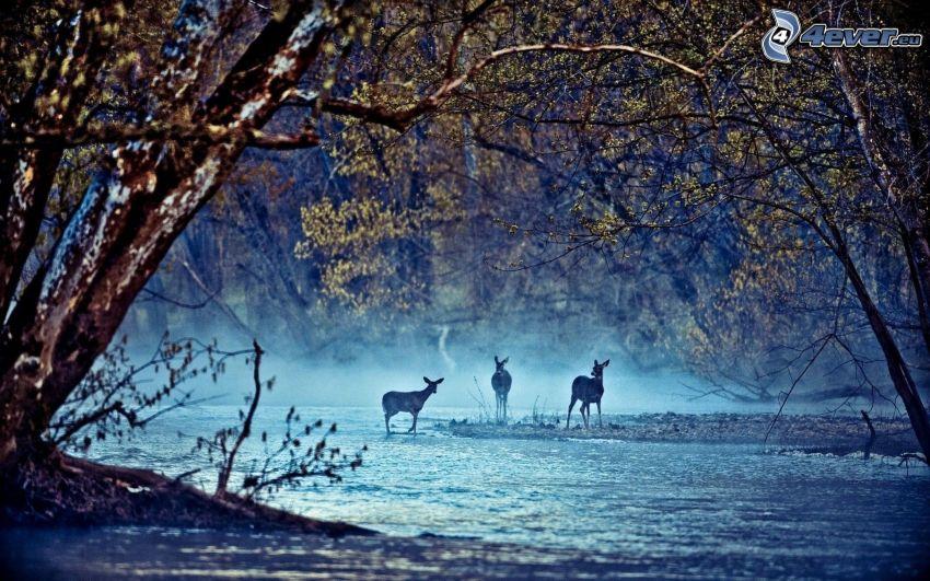 corza, río, árboles