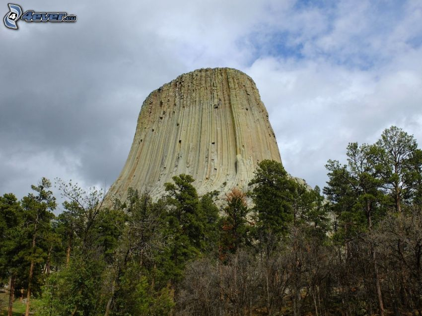 Devils Tower, bosque, árboles secos