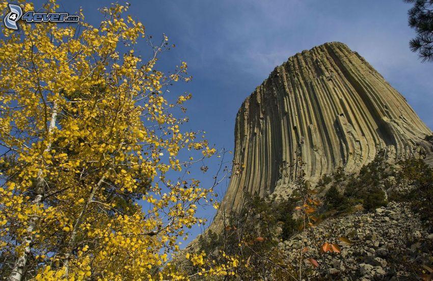Devils Tower, roca, árbol amarillo