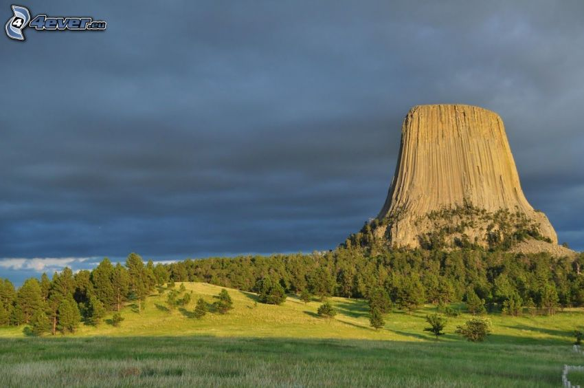 Devils Tower, roca, bosque, prado