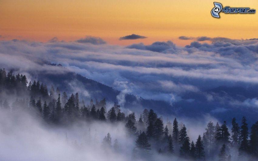 encima de las nubes, árboles coníferos, cielo anaranjado